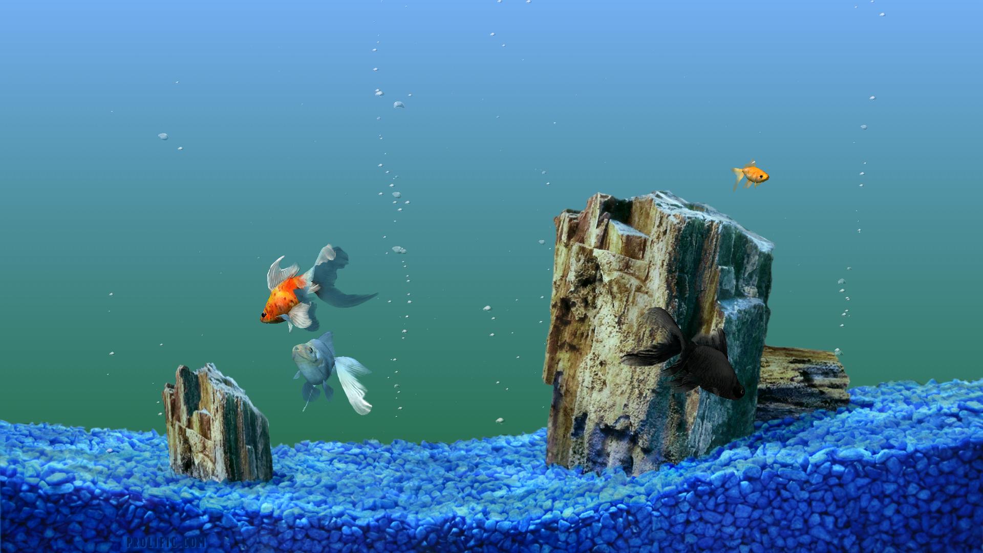 Fish aquarium screensaver for xp - Sim Aquarium Screensaver 2 07
